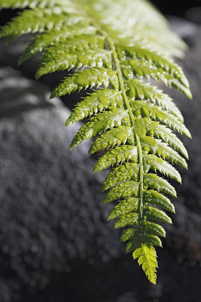 Pflanzen / Tiere